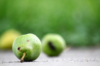 Pear_Casualties